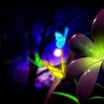 purple flower desktop background
